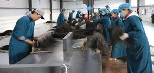 Mongolia begins producing semi-final horsehair, yak fiber and camel wool products