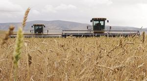 'Importing wheat was a good call'