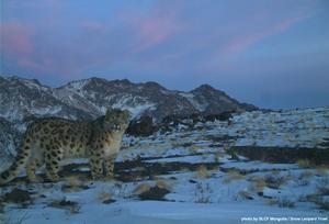 Snow leopard conservationist speaks about Tost Tosunbumba National Park