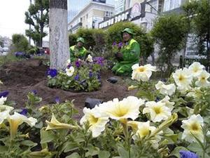 Ulaanbaatar becomes greener with 480,000 trees planted in 2016